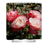 Rose Nostalgia  Shower Curtain