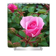 Rose Ocean City Md Shower Curtain
