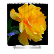 Rose Of Cleopatra Shower Curtain