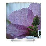 Rose Of Sharon 14-2 Shower Curtain