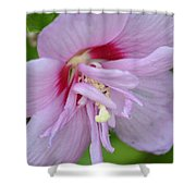 Rose Of Sharon 14-4 Shower Curtain
