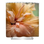 Rose Of Sharon. Hibiscus Shower Curtain