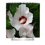 Rose Of Sharon Shower Curtain