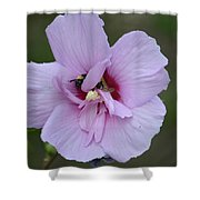 Rose Of Sharon With Bee Shower Curtain
