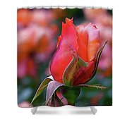 Rose On Rose Shower Curtain