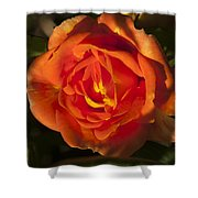 Rose Orange Shower Curtain