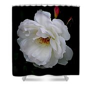 Rose Perfection Shower Curtain