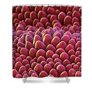 Rose Petal Surface Sem Shower Curtain