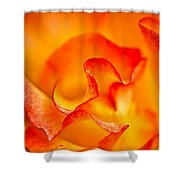 Rose Petals Closeup Shower Curtain