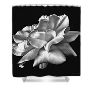 Rose Petals In Black And White Shower Curtain