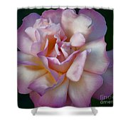 Rose Petals Straight From My Heart Shower Curtain