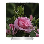 Rose Pictures 328 Shower Curtain