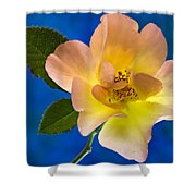 Rose Portrait Shower Curtain