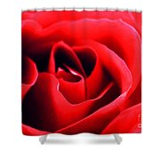 Rose Red Shower Curtain by Darren Fisher