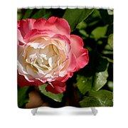 Rose Ruffles Shower Curtain