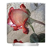 Rose To The Side 4 Shower Curtain
