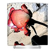 Rose To The Side 5 Shower Curtain