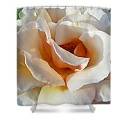 Rose Upclose Filtered Shower Curtain