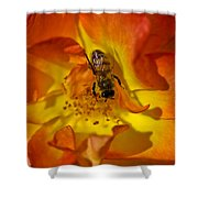 Rose With Bee Shower Curtain