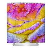 Rose With Dew Drops In Candy Colors Shower Curtain