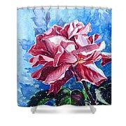 Rose Shower Curtain by Zaira Dzhaubaeva