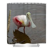 Roseata Spoonbill   #4822 Shower Curtain
