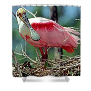 Roseate Spoonbill Adult In Breeding Shower Curtain