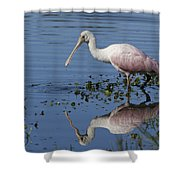 Roseate Spoonbill Hunting Shower Curtain