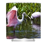 Roseate Spoonbill No.2 Shower Curtain