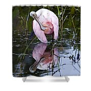 Roseate Spoonbill No.3 Shower Curtain