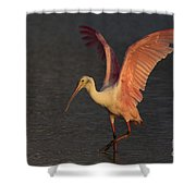 Roseate Spoonbill Photograph Shower Curtain