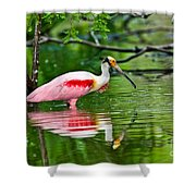 Roseate Spoonbill Wading Shower Curtain