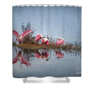 Roseate Spoonbills At Rest Shower Curtain