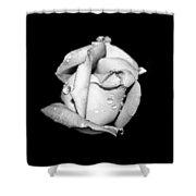 Rosebud In Black And White Shower Curtain