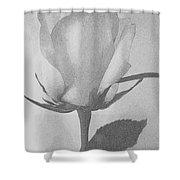 Rosebud Sketch No 1 Shower Curtain