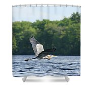 Roseland Lake Great Blue Heron Fly By  Shower Curtain