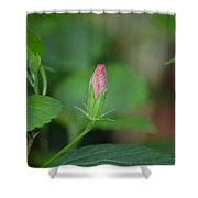 Rosemallow Bud Shower Curtain