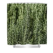 Rosemary Forest Shower Curtain
