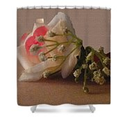 Roses And Baby's Breath Shower Curtain