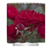 Roses And Roses Shower Curtain