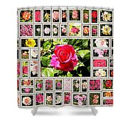 Roses Collage 2 - Painted Shower Curtain by Stefano Senise