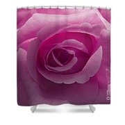 Roses Have Ruffles And Ridges Shower Curtain