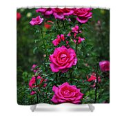 Roses In The Garden Shower Curtain