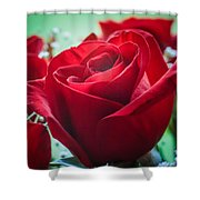 Roses In The Window Shower Curtain