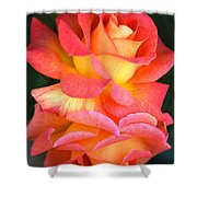 Roses Of Many Colors Shower Curtain