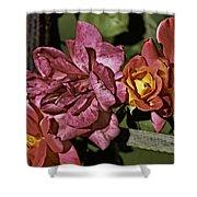 Roses On Trellis Shower Curtain