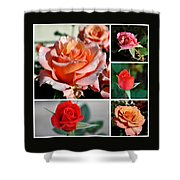 Roses Roses Roses I Thank All The Roses Shower Curtain