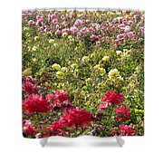 Roses Roses Roses Shower Curtain