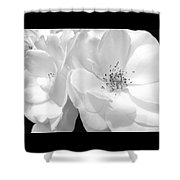 Roses Soft Petals In Black And White Shower Curtain