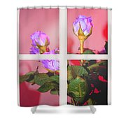 Roses Through The Window Shower Curtain